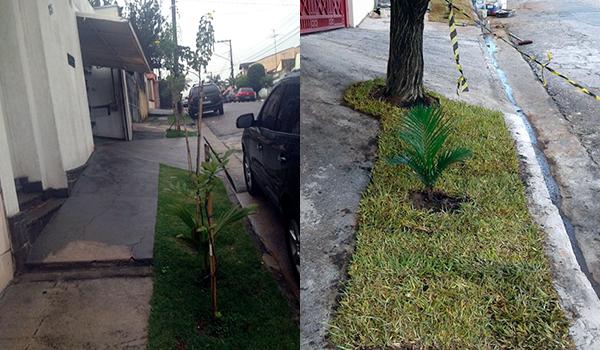 Calçada Verde - Sustentabilidade para Empresas e Instituições - ECRA Sustentabilidade Urbana