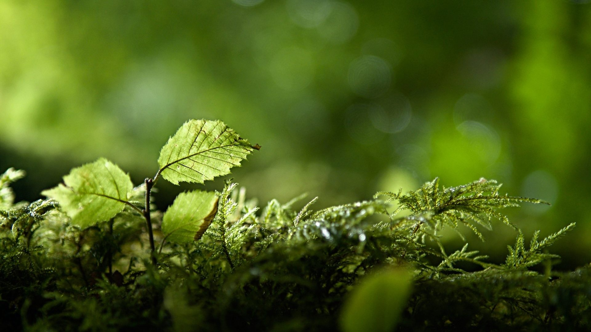 Lançamento ECRAmove Agro