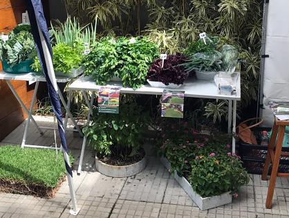 Bazar solidário arrecada doações para Instituto a Casa do Jardim