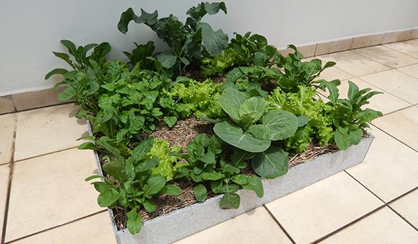 ECRAmove Agro - Agricultura Urbana com a ECRA Sustentabilidade Urbana