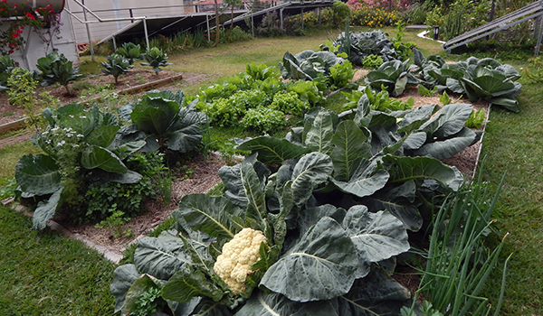 Agricultura Urbana em Laje ECRA