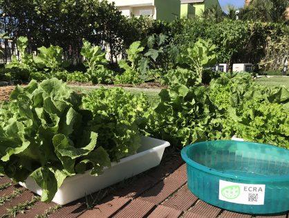 Agricultura Urbana em Laje