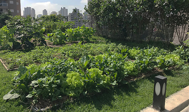 Agricultura Urbana em Laje Verde - ECRA Sustentabilidade Urbana