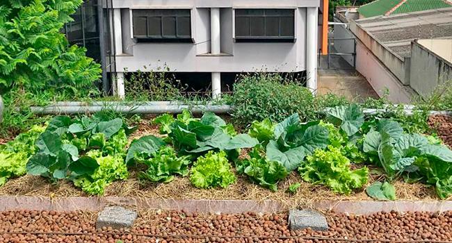 Agricultura Urbana com ECRAmove Agro - ECRA Sustentabilidade Urbana