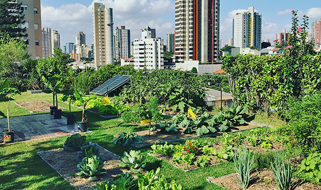 Agricultura Urbana em Laje Verde